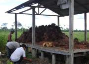 Terreno con 25 has de palma aceitera en produccion