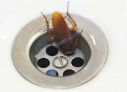Cucarachas ssss ya basta fumigue  7968942-977678434 jhan