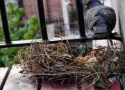 Fumigaciones chuchuys de palomas, piojillos de palomas 792-4646 rpc 963-765-221