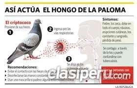 Picazon en el cuerpo - fumigaciones chuchuys de palomas 792-4646