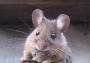 ahuyentador de ratas, pericotes,murcielagos