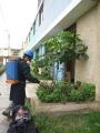 FUMIGACION INTEGRAL ARAOZ PERU 529-4512 EN LIMA LINCE