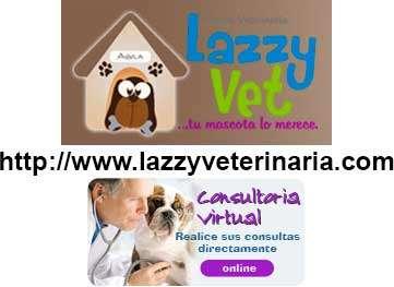Lazzyveterinaria.com - lazzy vet clínica veterinaria cusco