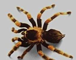 Fumigacion de arañas ,grillos,moscas 7968942- 975255535 jhan
