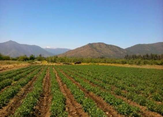 Fotos de Vendo terrenos agrícolas . 1